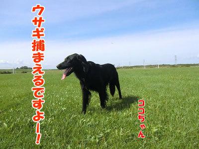 チャンスとティアラ+ココ-20120922-1-400.jpg