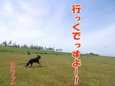 チャンスとティアラ+ココ-20120922-2-400.jpg