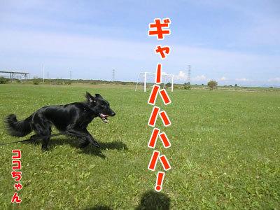 チャンスとティアラ+ココ-20120922-3-400.jpg