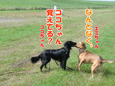 チャンスとティアラ+ココ-20120922-4-400.jpg