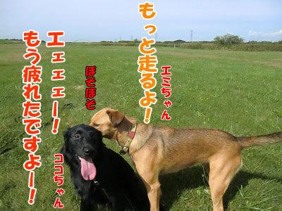 チャンスとティアラ+ココ-20120922-5-400.jpg
