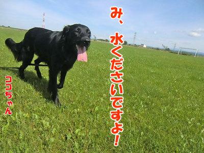 チャンスとティアラ+ココ-20120922-8-400.jpg