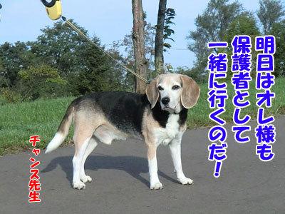チャンスとティアラ+ココ-20120922-10-400.jpg