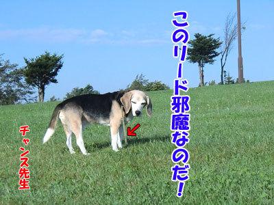 チャンスとティアラ+ココ-20120923-1-400.jpg