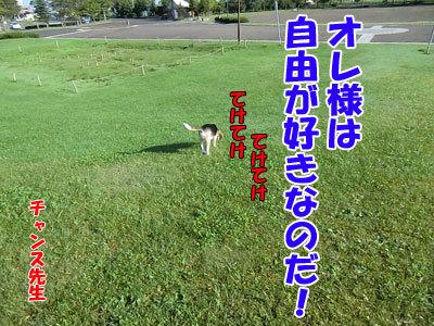 チャンスとティアラ+ココ-20120923-2-400.jpg