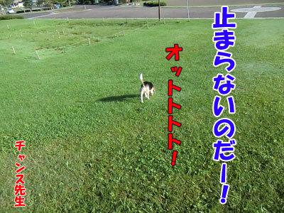 チャンスとティアラ+ココ-20120923-3-400.jpg