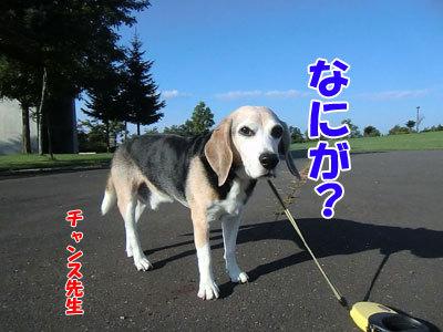 チャンスとティアラ+ココ-20120923-6-400.jpg