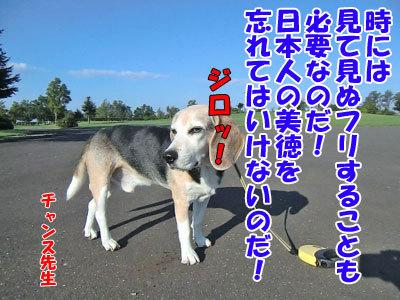 チャンスとティアラ+ココ-20120923-7-400.jpg