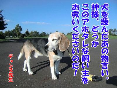 チャンスとティアラ+ココ-20120923-8-400.jpg
