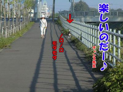 チャンスとティアラ+ココ-20120924-2-400.jpg