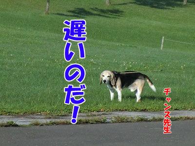 チャンスとティアラ+ココ-20120924-4-400.jpg