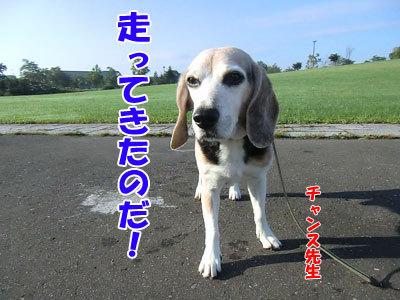 チャンスとティアラ+ココ-20120924-5-400.jpg