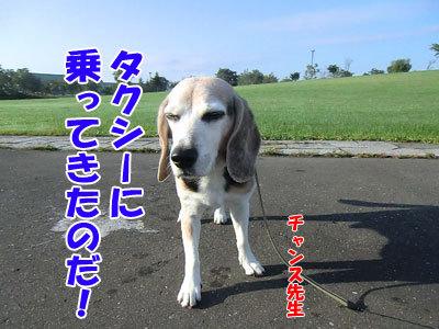 チャンスとティアラ+ココ-20120924-6-400.jpg