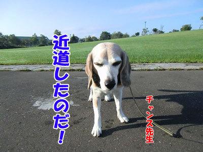 チャンスとティアラ+ココ-20120924-7-400.jpg