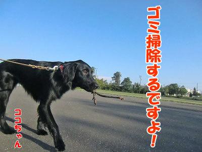 チャンスとティアラ+ココ-20120925-1-400.jpg