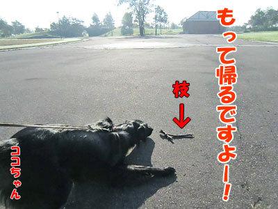 チャンスとティアラ+ココ-20120925-3-400.jpg