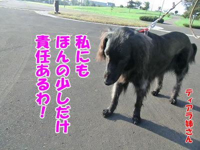 チャンスとティアラ+ココ-20120925-5-400.jpg