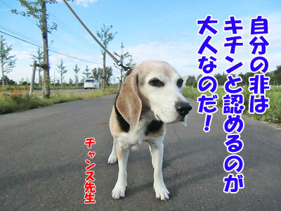 チャンスとティアラ+ココ-20120925-6-400.jpg