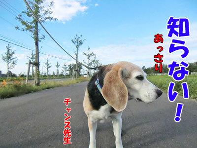 チャンスとティアラ+ココ-20120925-7-400.jpg