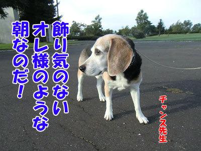 チャンスとティアラ+ココ-20120926-2-400.jpg