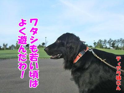 チャンスとティアラ+ココ-20120926-5-400.jpg