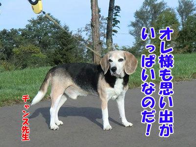 チャンスとティアラ+ココ-20120926-6-400.jpg