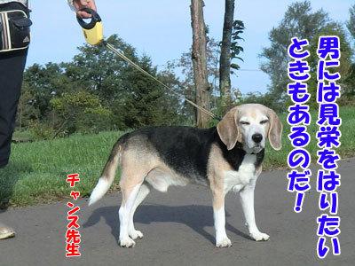 チャンスとティアラ+ココ-20120926-7-400.jpg