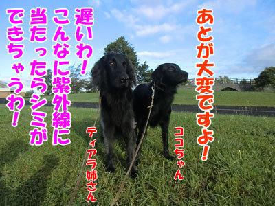 チャンスとティアラ+ココ-20120927-1-400.jpg