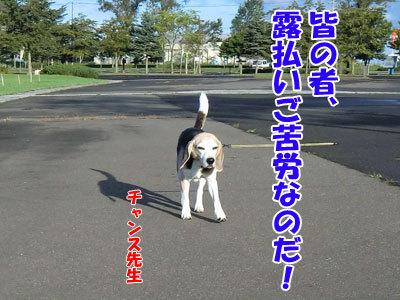 チャンスとティアラ+ココ-20120927-3-400.jpg