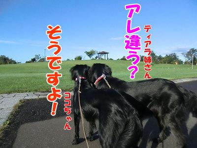 $チャンスとティアラ+ココ-20120927-4-400.jpg