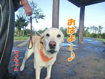 チャンスとティアラ+ココ-20120927-5-400.jpg