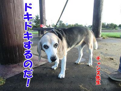チャンスとティアラ+ココ-20120927-6-400.jpg