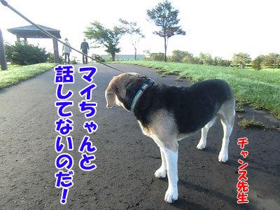 チャンスとティアラ+ココ-20120927-8-400.jpg