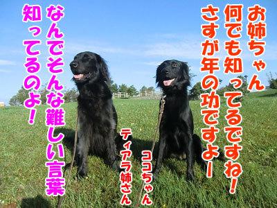 チャンスとティアラ+ココ-20120928-6-400.jpg