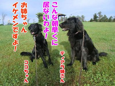 チャンスとティアラ+ココ-20120929-1-400.jpg