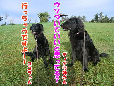 チャンスとティアラ+ココ-20120929-2-400.jpg