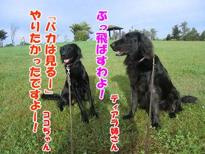 チャンスとティアラ+ココ-20120929-3-400.jpg