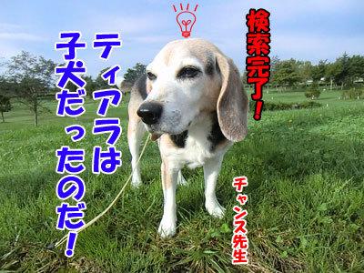 チャンスとティアラ+ココ-20120929-7-400.jpg
