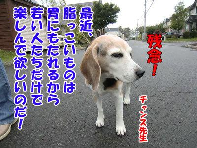 チャンスとティアラ+ココ-20120930-4-400.jpg