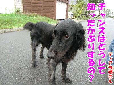 チャンスとティアラ+ココ-20120930-5-400.jpg