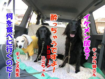 チャンスとティアラ+ココ-20121022-1-400.jpg