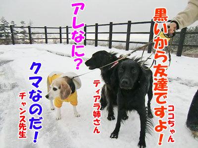 チャンスとティアラ+ココ-201210229-400.jpg