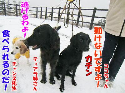 チャンスとティアラ+ココ-20121022-10-400.jpg
