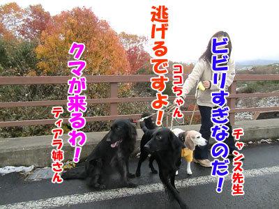チャンスとティアラ+ココ-20121022-11-400.jpg