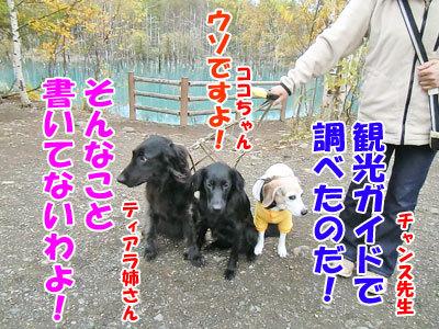 チャンスとティアラ+ココ-20121023-5-400.jpg