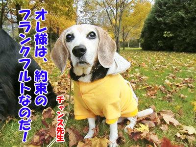 チャンスとティアラ+ココ-20121023-7-400.jpg