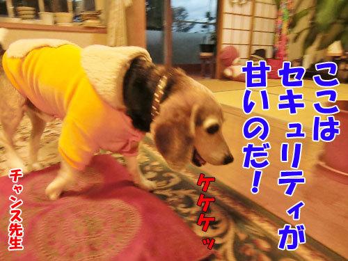 チャンスとティアラ+ココ-20121024-1-500.jpg