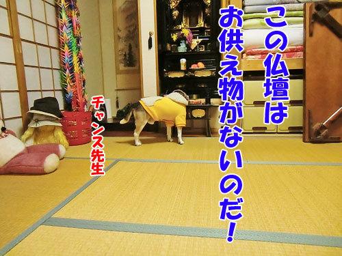 チャンスとティアラ+ココ-20121024-2-500.jpg