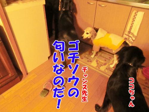 チャンスとティアラ+ココ-20121024-3-500.jpg