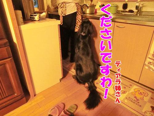 チャンスとティアラ+ココ-20121024-4-500.jpg